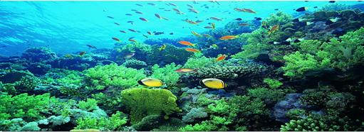 海藻类植物素材