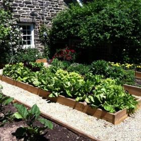 花园植物设计图